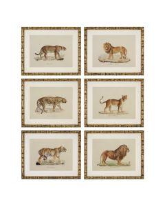 Lion, Tigre, Jaguar Prints - Set of 6