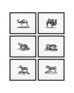 Historical Animal Prints - Set of 6  Prints
