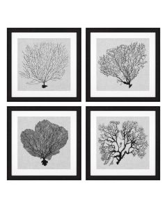 Shadow Sea Fans Prints - Set of 4