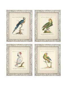 Dunbar I Prints - Set of 4